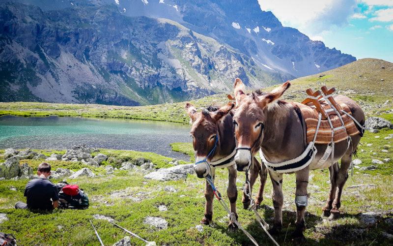 Esprisarvadzo, Avventura Valle d'Aosta, Escursioni Valle d'Aosta, Escursioni con asini